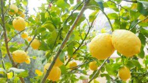 Limontino Sardinia Products