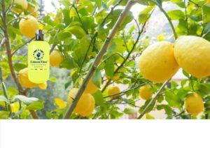 Limoncello Limontino Sardinia Products