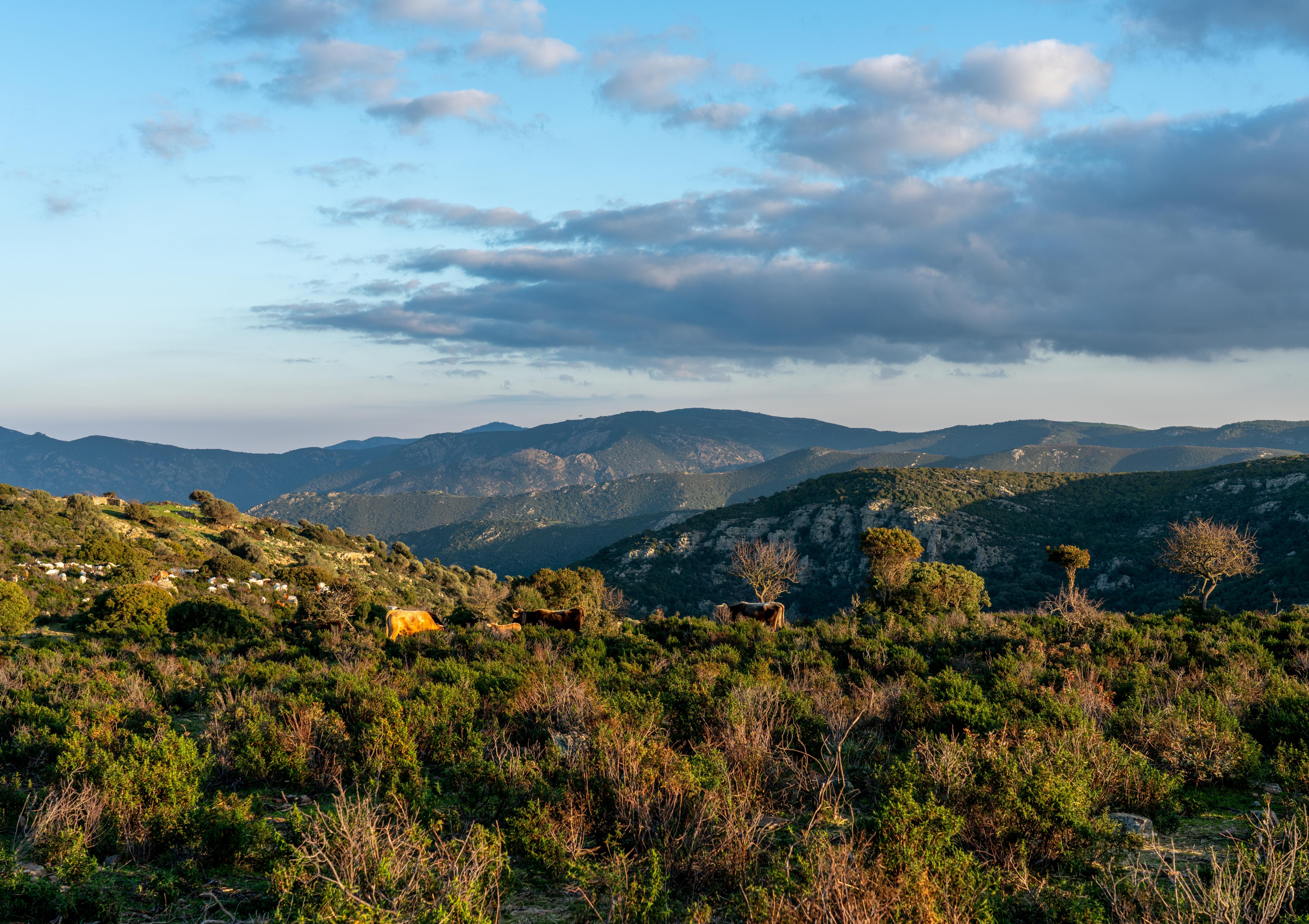 Sardinie 3.04
